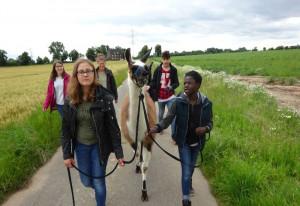 Lama-Trekking und mehr: Das Raphaelshaus bot wieder ein vielseitiges Ferienprogramm.