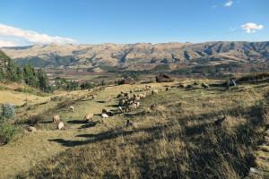 Wer spendet für die Flutopfer in Peru?